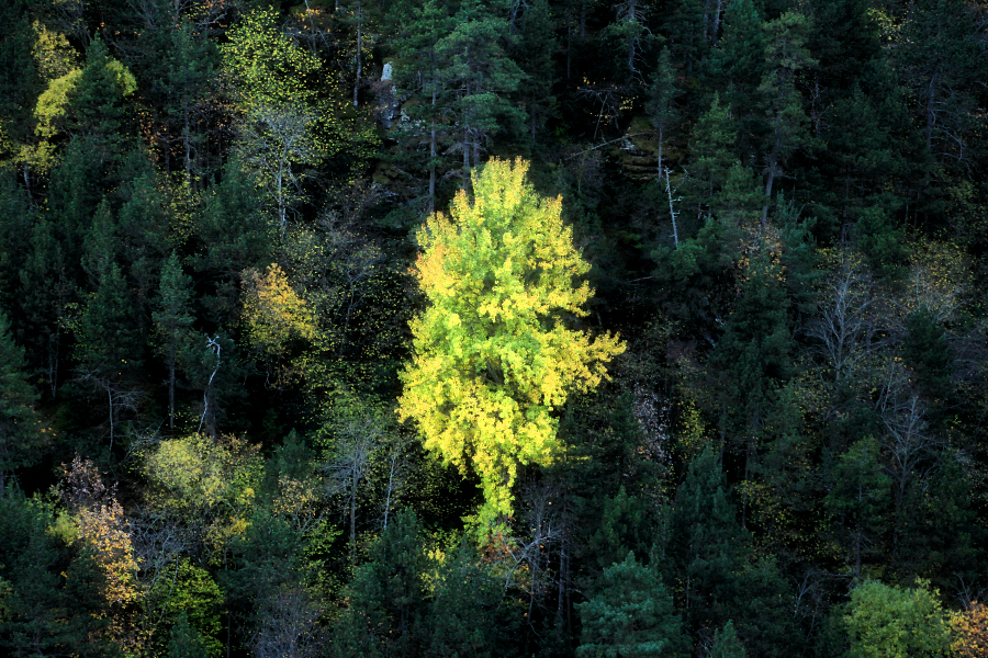 Green yellow tree