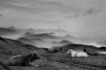cow's rest / el descans de les vaques