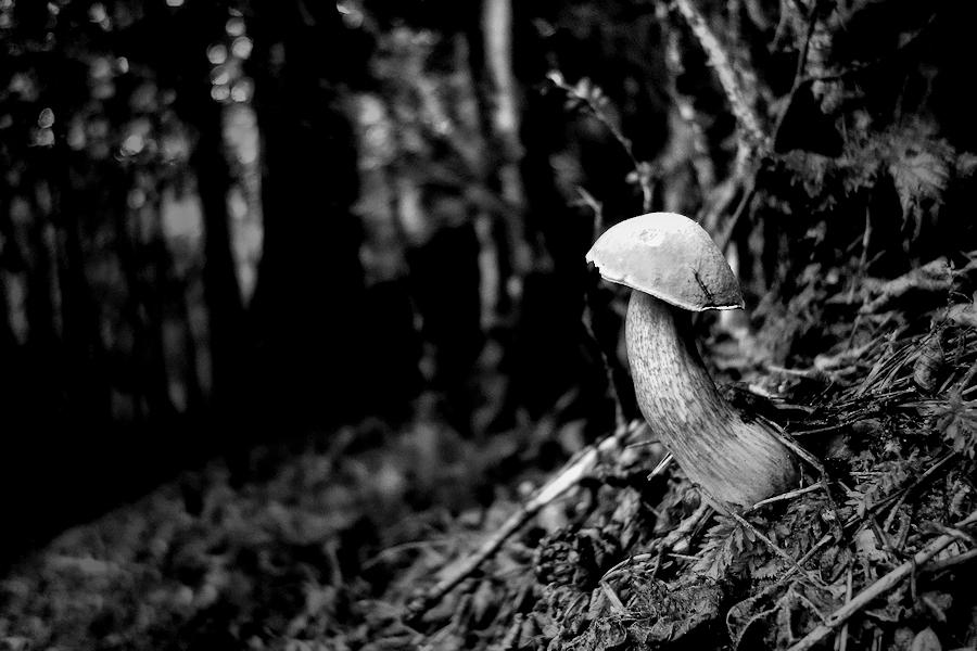 the mushroom / el bolet