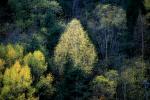 autumn paintings / pintures de tardor - III