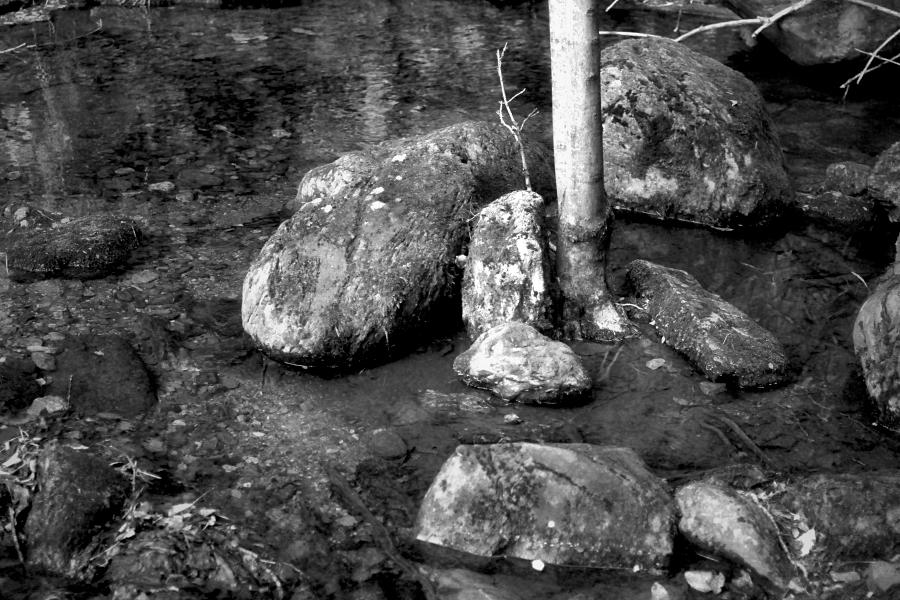 l'arbre del riu