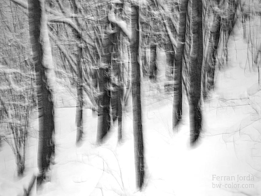 snowy forest / el bosc nevat