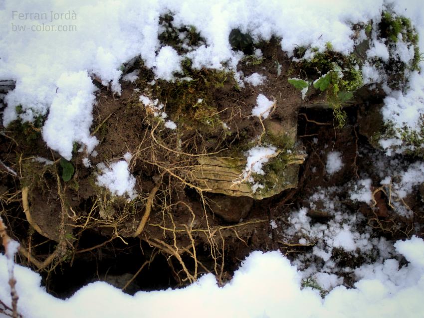 roots / arrels