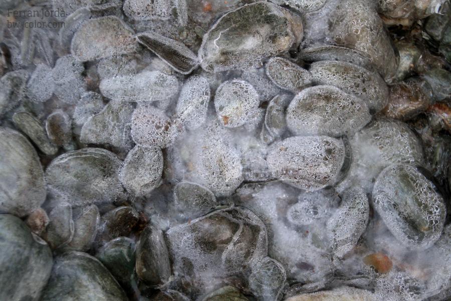 frozen stones of the river / les pedres congelades del riu