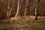 forest life / vida del bosc