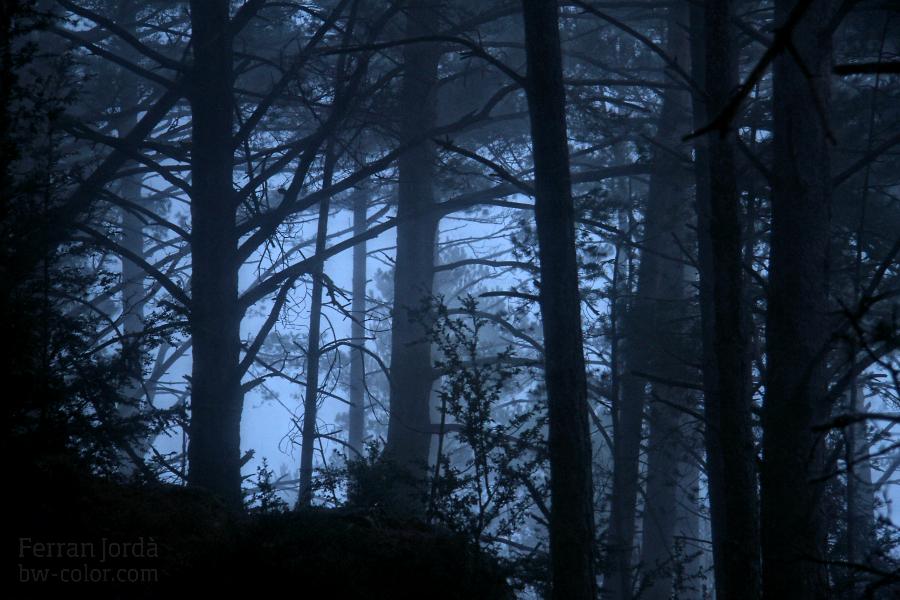 fog in the forest / la boira al bosc