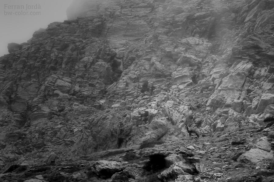 rock's kingdom and king of the rocks / el rei de les roques