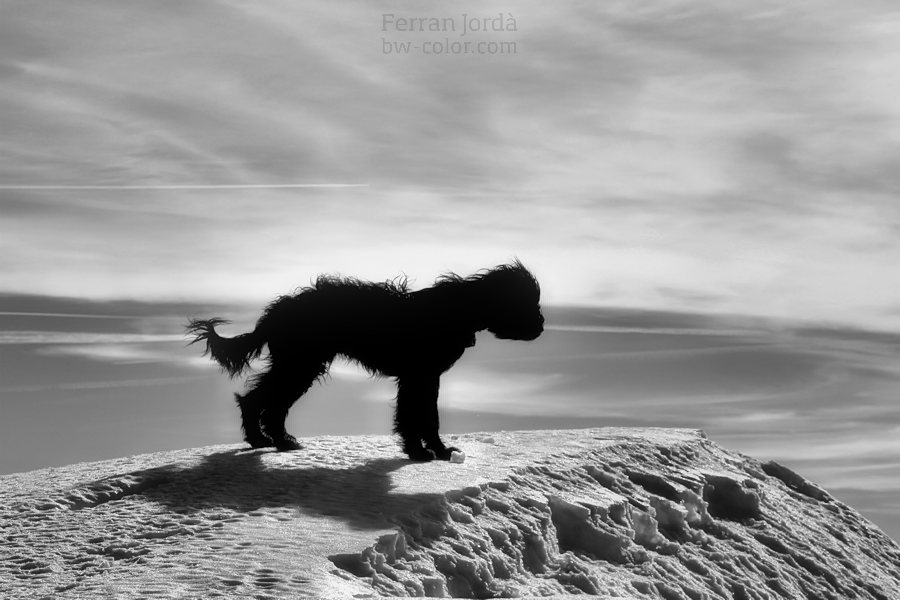 dog at the top / gos al cim