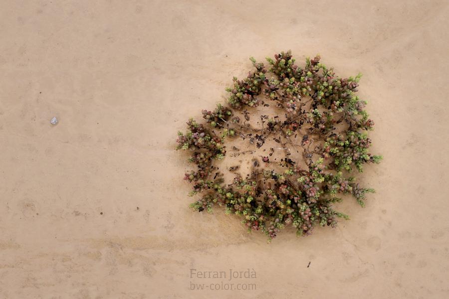 the desert's flora / la flora del desert