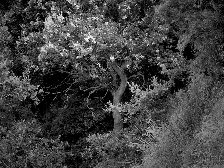 the hidden tree