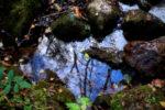 autumn waters / aigües de tardor