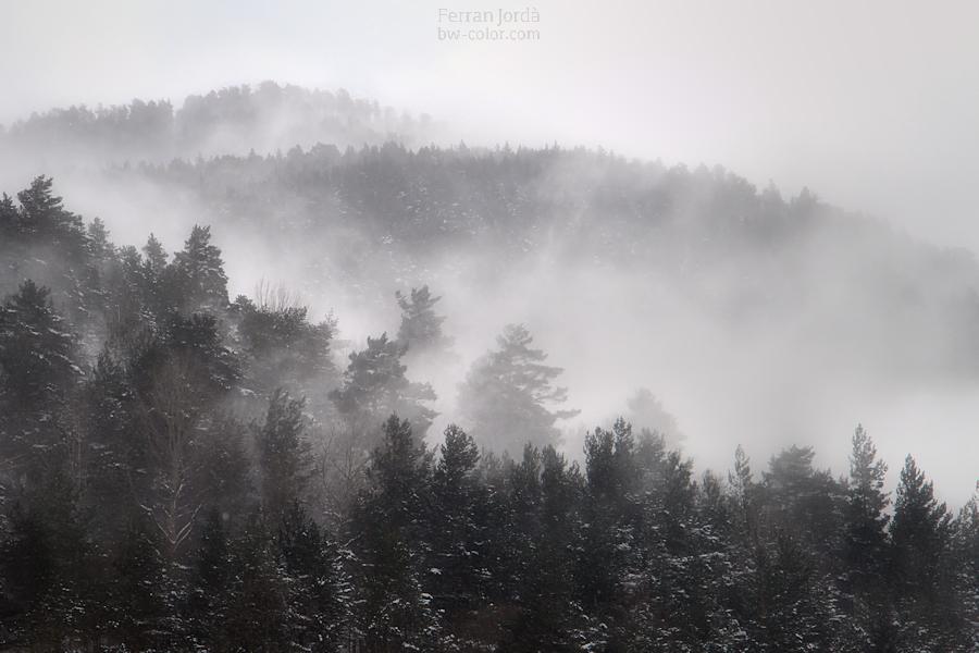 d'aquestes ventades amb neu al bosc