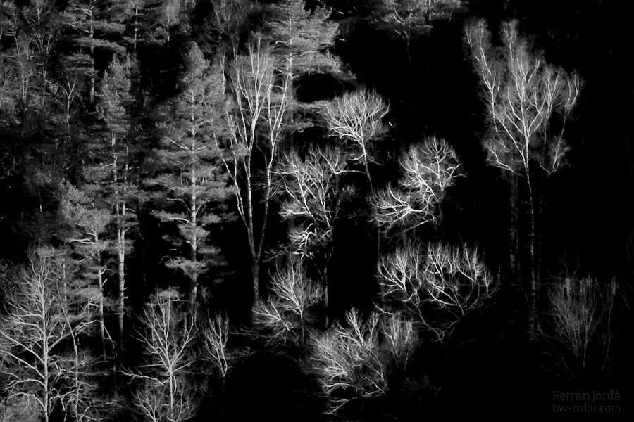 Forest / Bosc