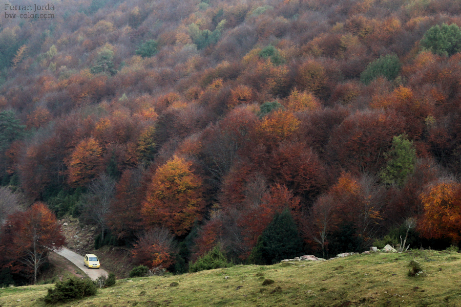 autumn sundays / diumenges de tardor