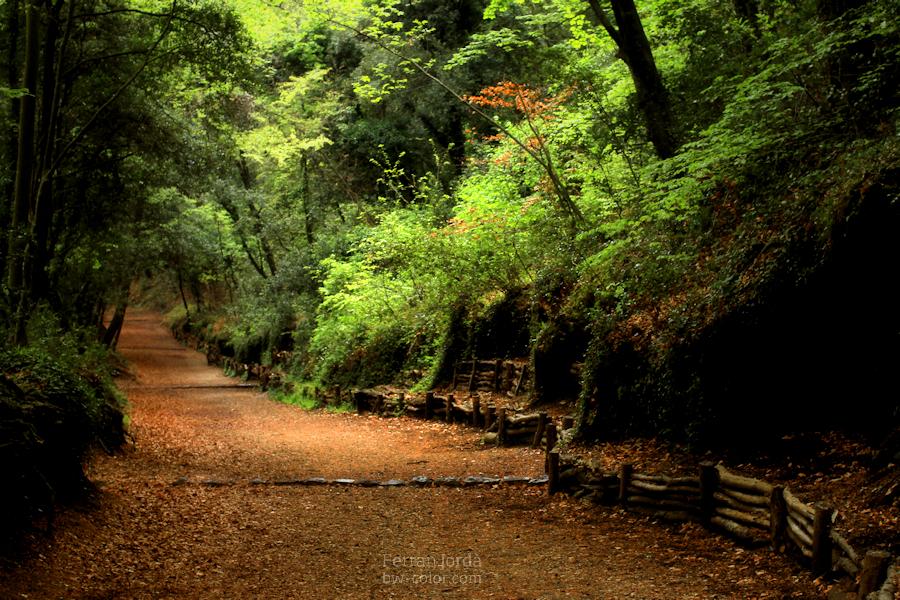 a place for a nice walks / un lloc per passejar