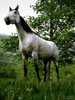 the horse / el cavall