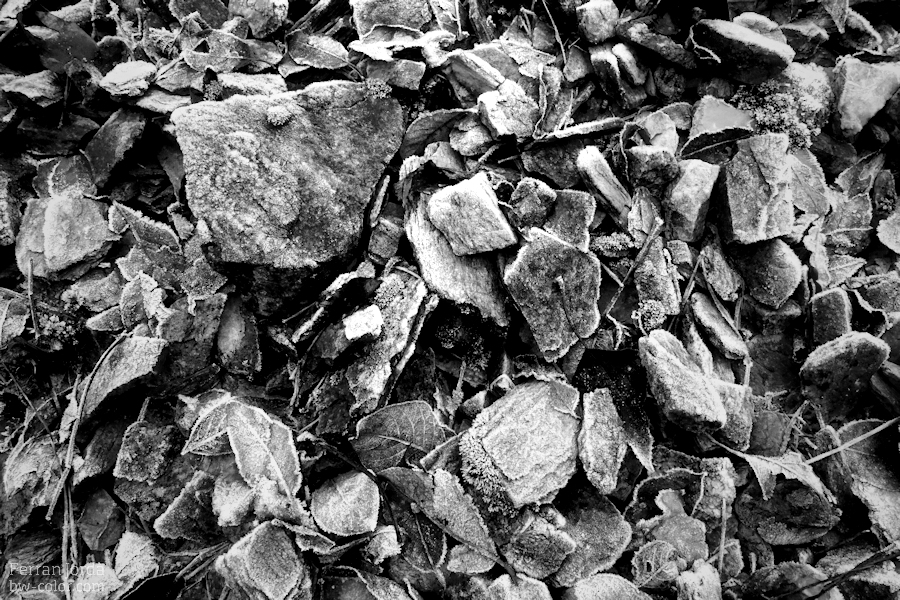 black frozen stones and some leaves