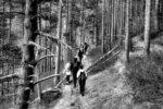 a walk through the forest / un passeig pel bosc