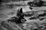 the flow of life and death / el fluxe de la vida i la mort