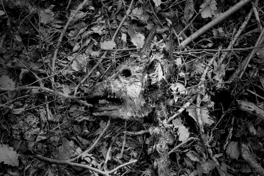 mask after death / màscara després de la mort