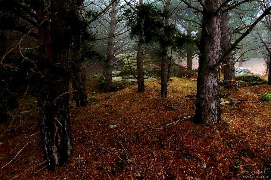 rock on the forest / roca al bosc