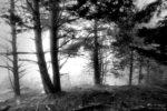 some trees / alguns arbres