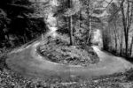 autumn road / carretera de tardor