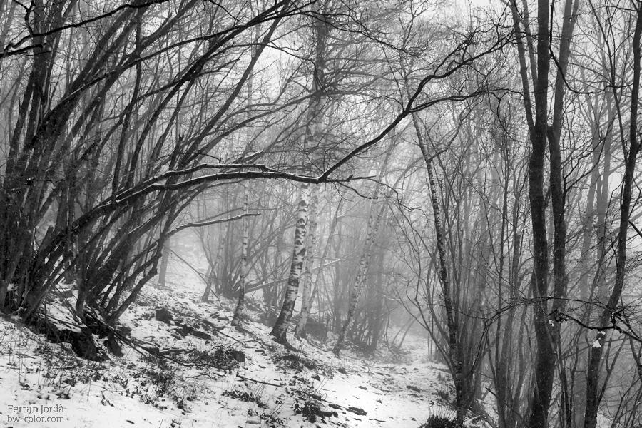 a walk through winter / un passeig per l'hivern