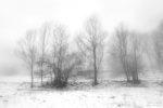 last winters / darrers hiverns