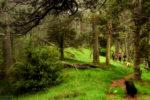 about forest walks / de passejos pel bosc