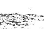 flight over white / vol en blanc