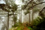 about those foggy days on the forest / dels dies de boira al bosc
