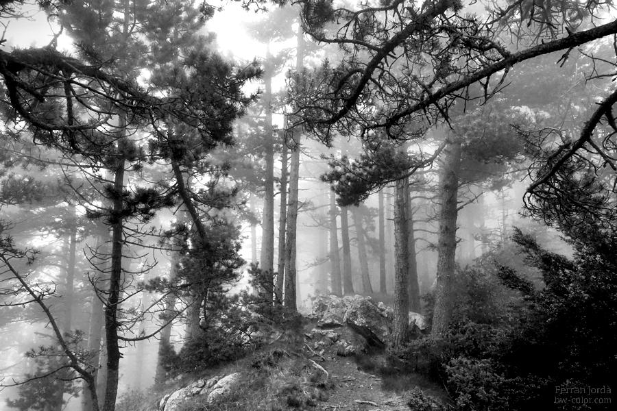 about those foggy days on the forest / dels dies de boira al bosc