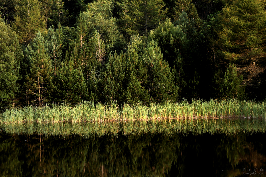 reflecting on the forest / reflexionant al bosc