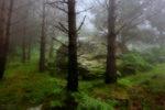 El roc del bosc un dia boirós d'estiu