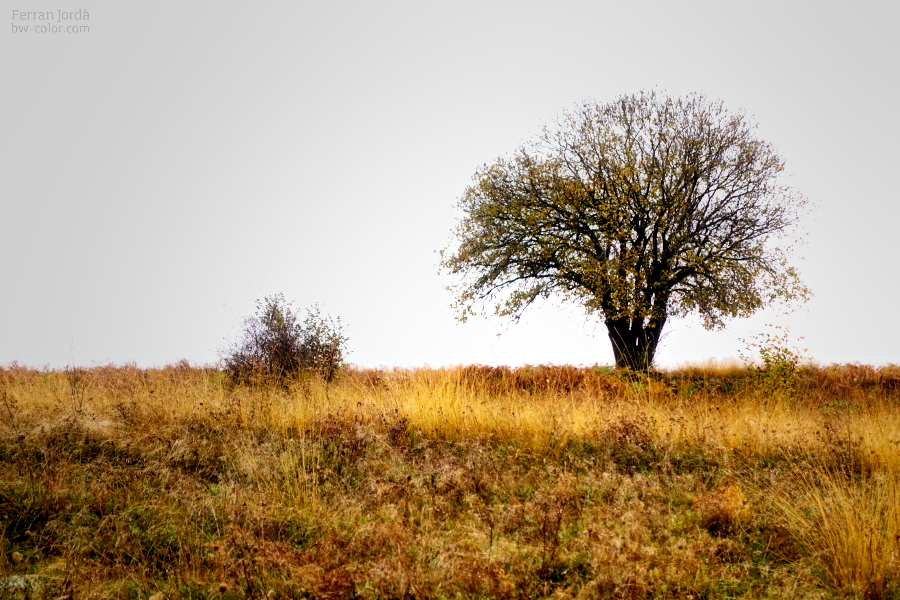 solitudes / solituds