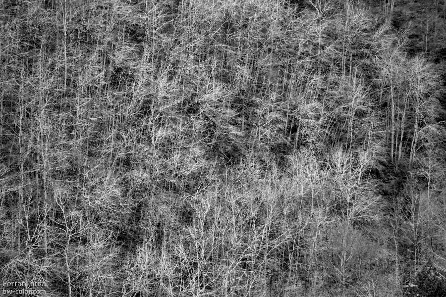 Bare trees / Arbres despullats