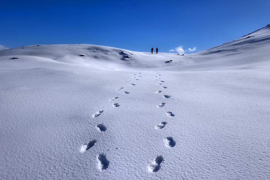snow walkers / caminants de la neu